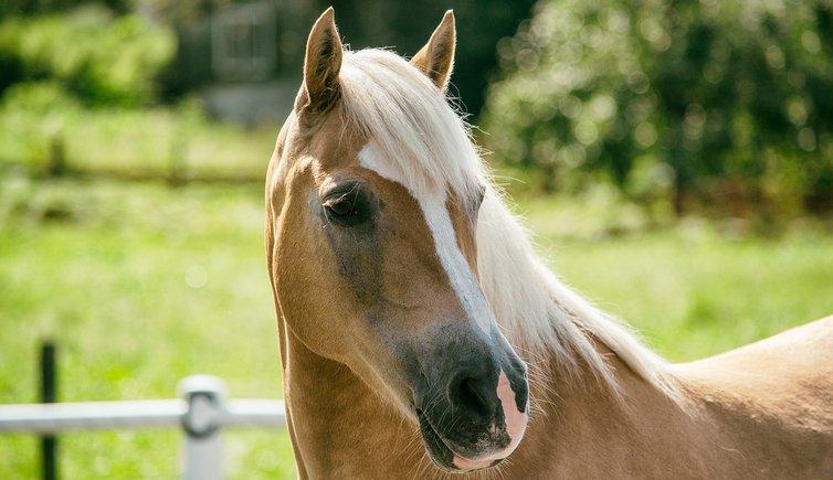 Gita in carrozza trainata da cavalli lutago alto adige for Cavalli bolzano