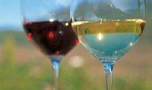 Percorso del vino a Cornaiano