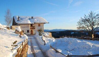 Bolzano e dintorni hotel alberghi appartamenti alto for Cavalli bolzano