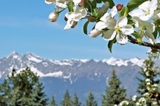 Spring in South Tyrol